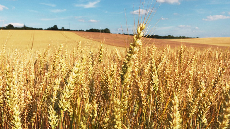 Industrie agroalimentaire : stop au piétin échaudage