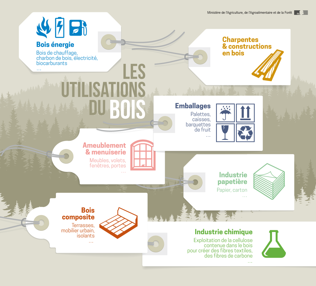 Focus et infographies sur l'industrie du bois